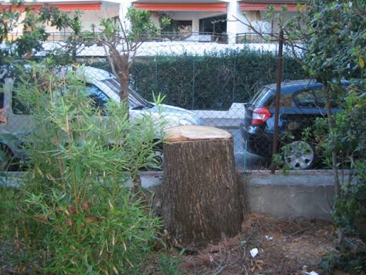 loi arbres voisinage